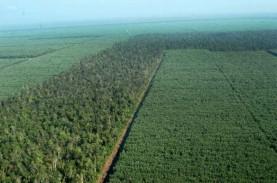 Deforestasi Indonesia Meningkat Sepanjang Periode…