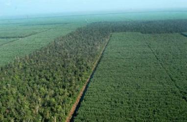 Deforestasi Indonesia Meningkat Sepanjang Periode 2013-2017