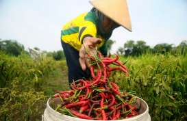 Urai Masalah Pasokan, Kadin Minta Pemerintah Realisasikan Klaster Hortikultura