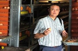 PT Berdikari Siap Masuk Bisnis Rumah Potong Unggas