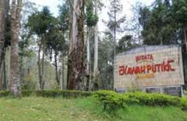 Akibat Kebakaran Hutan, Kawasan Ciwidey Ditutup