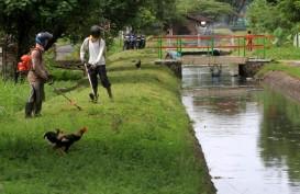 Bencana Kekeringan: Petani Samigaluh Harapkan Solusi Irigasi