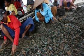 Awas, Kerang Hijau Teluk Jakarta Tak Layak Konsumsi