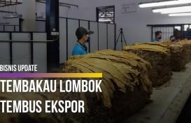 Menengok Proses Pembelian Raya Tembakau di Lombok