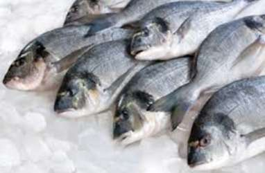 Perikanan Nusantara Operasikan Cold Storage Berkapasitas 200 Ton di Mimika