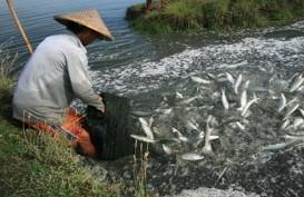 Kaltara Distribusikan 2 Juta Ekor Ikan Bandeng ke Tarakan