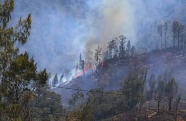 Tim Penanganan Karhutla Terjebak Kebakaran di Argopuro