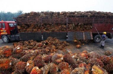 Indonesia Manfaatkan RCEP untuk Muluskan Ekspor CPO ke India