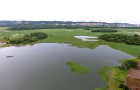 Ancam Pasok Air di Batam, 180 Hektar Eceng Gondok akan Bersihkan