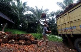 Pemerintah Dorong Penguatan Sertifikasi Minyak Sawit Berkelanjutan (ISPO)