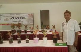 Aglonema National Contest, Hadirkan Pecinta dari Penjuru Nusantara