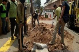 Trotoar Diperlebar, Warga Protes Pohon Tua di Cikini…