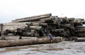 Produksi Kayu Bulat Diprediksi Tumbuh hingga 15 Persen