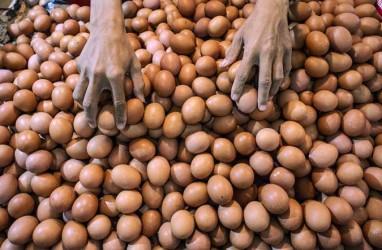 Afkir Dini Jadi Solusi atas Rendahnya Harga Telur Ayam