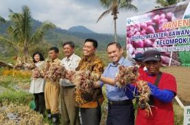 Kabupaten Malang Didorong Jadi Sentra Bawang Merah…