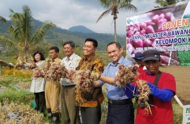 Kabupaten Malang Didorong Jadi Sentra Bawang Merah Nasional