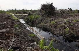 Hasil Riset UNRI, Gambut di Pulau Kecil Rawan Terbakar