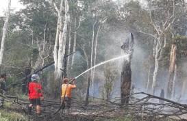 Ini 10 Perusahaan Dominasi Kebakaran Hutan di Sumsel