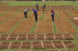Jaga Daya Saing Petani Lokal, Pemerintah Bakal Kendalikan Impor Tembakau