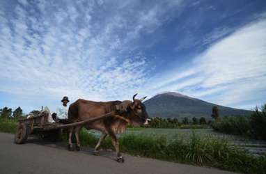 Tour de Singkarak Hari Ini Bermula dari Keindahan Kayu Aro di Kaki Kerinci