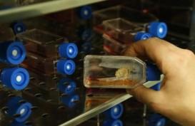 Kembangkan Stem Cell dan Cangkang Kapsul Rumput Laut, Unair Dipuji Menristek