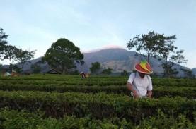 PTPN XII Bidik Pendapatan Wisata Agro Tembus Rp100…