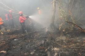 Atasi Karhutla, Riau Ajukan Bantuan Alat Berat Dari…