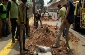 Penebangan Pohon di Cikini, Ketua DPRD DKI Akan Panggil Dinas Kehutanan
