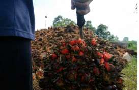 PT Aceh Makmur Bersama di Aceh Ekspor CPO ke India