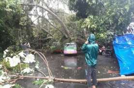 Antisipasi Pohon Tumbang, Ini Langkah Pemkot Semarang