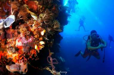 Menyelami Potensi Wisata Bawah Laut Maumere
