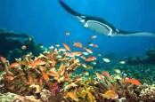Pemprov Kaltim Tetapkan Kawasan Konservasi di Kepulauan Derawan dan Perairan Sekitarnya