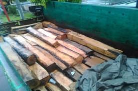 KLHK Sita 17 Kontainer Kayu Ilegal dari Maluku