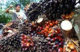 Kebijakan Tarif Disesuaikan, Ekspor CPO Indonesia ke India Kembali Naik