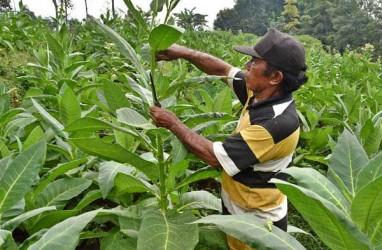 Jaga Industri Hasil Tembakau, Revisi PP No.109/2012 Perlu Kajian Mendalam
