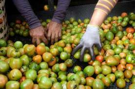Harga Tomat Masih Tinggi, TPID Sulut Bakal Gelar Operasi…