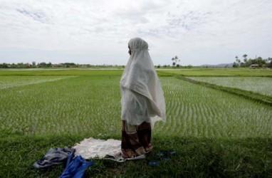 Aceh Tamiang Pacu Pencetakan Areal Sawah Baru