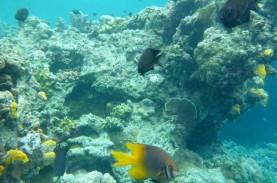KKP Berkukuh Pertahankan Koral Alam