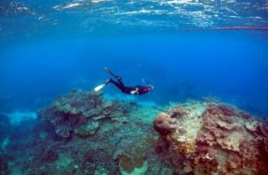 DPR Minta KKP dan KLHK Kaji Aturan Perdagangan Koral