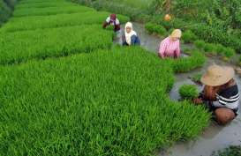 Petani di Karawang Tunda Tanam Akibat Persediaan Air belum Maksimal