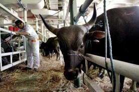 Indonesia Jajaki Kerja Sama Penguatan Industri Ternak…