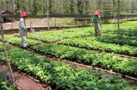 1.000 Kebun Bibit Desa Disiapkan untuk Bentuk Budaya…