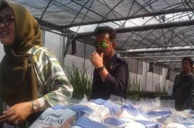 Mentan Syahrul Bantu Bibit Pertanian Mahasiswa Unhas