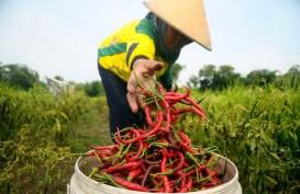 Pemprov Bangka Belitung Bagi-bagi Ribuan Bibit Cabai