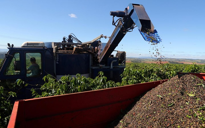 Ceri kopi yang dipanen dikumpulkan di sebuah perkebunan di Sao Joao da Boa Vista, Brasil 6 Juni 2019. - REUTERS / Amanda Perobelli