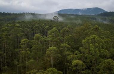 Indonesia Menuju Pasar Karbon Dunia