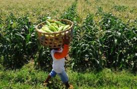 Belajar Sistem Agroekologi, Petani Korea Selatan Kunjungi Bantul