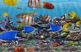 Ikan Hias Diharapkan Sumbang 10 Persen dari Total Nilai Ekspor Perikanan