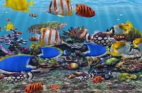 Ikan Hias Diharapkan Sumbang 10 Persen dari Total…