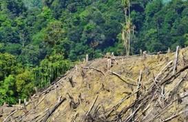 Sulteng Hadapi Ancaman Bencana Akibat 264.874 Ha Lahan Kritis